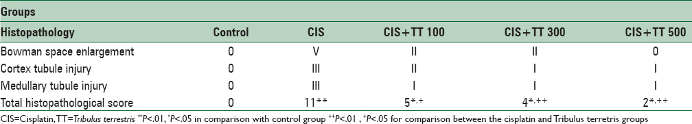 Table 2: The effects of intraperitoneal TT administration on renal histopathological scores induced by CIS