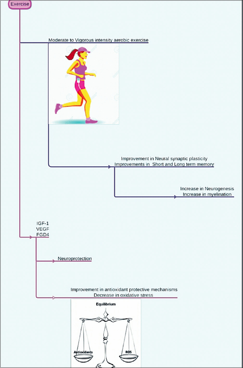 Figure 1: Possible role of exercise in neuroprotection